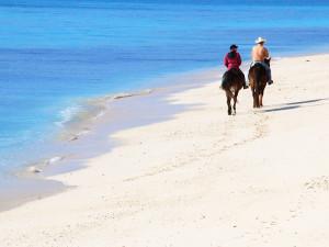 午年の元旦にビーチで馬に出会う