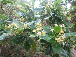 伊江島の花木