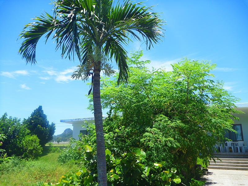 伊江島ダイビングサービスの庭(台風前)