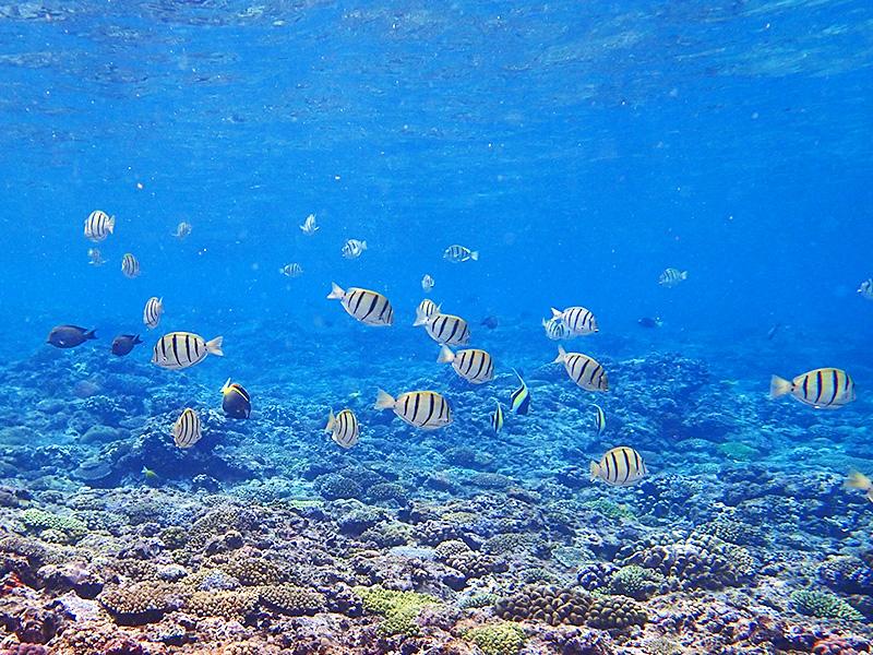 伊江島、浅瀬のサンゴ