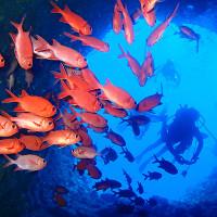 伊江島のダイビング