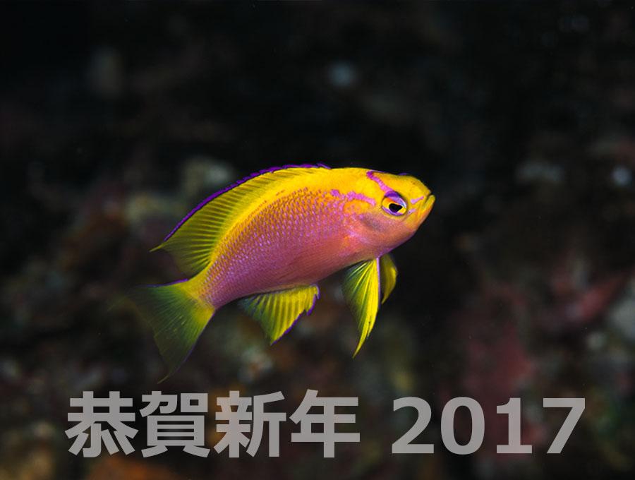 恭賀新年2017