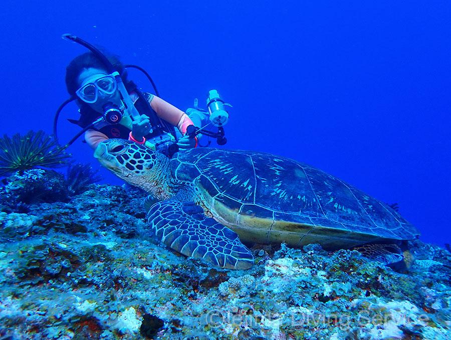 伊江島の北側ポイントの逃げないウミガメ