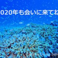 2020年 伊江島ダイビングサービス