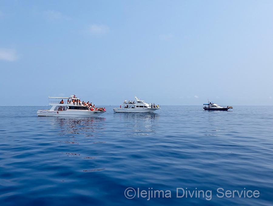 伊江島のホエールウォッチングに伊江島の船はいない