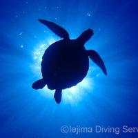 伊江島はウミガメも多いよ