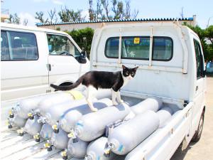 ネコのチャッピーもタンクの検査