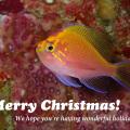 メリークリスマス!from 伊江島