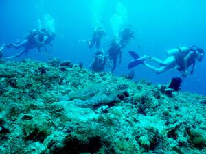 ダイビングポイント2006年夏合宿