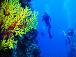 伊江島のドロップオフでダイビング