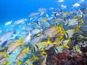 魚影の濃いイスラ・ムヘーレスの海
