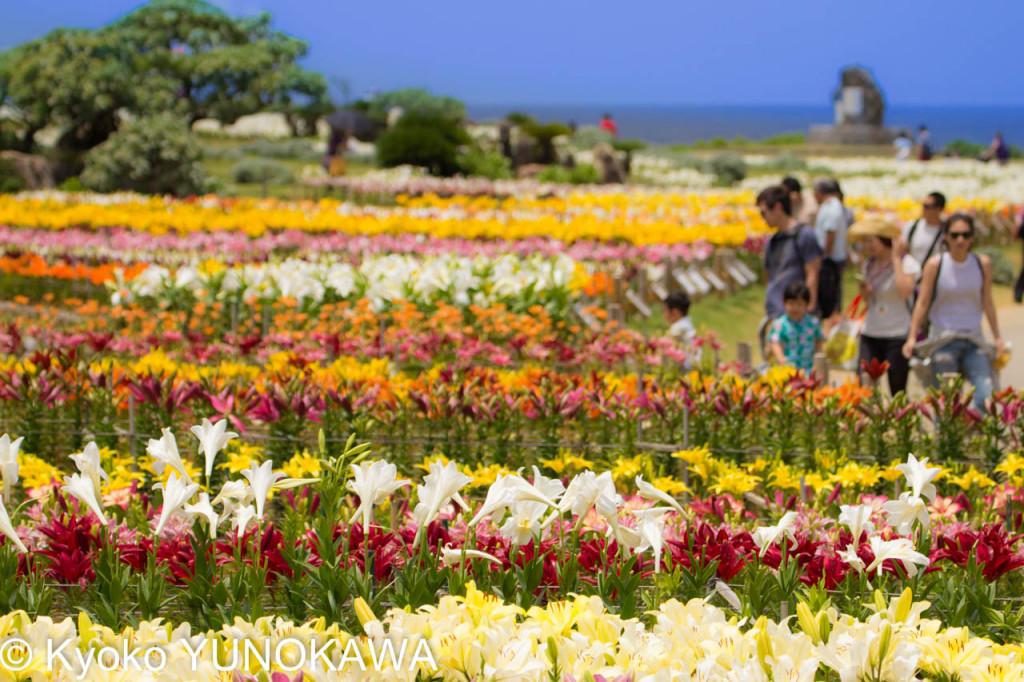 「第21回伊江島ゆり祭り」世界のゆりと観客