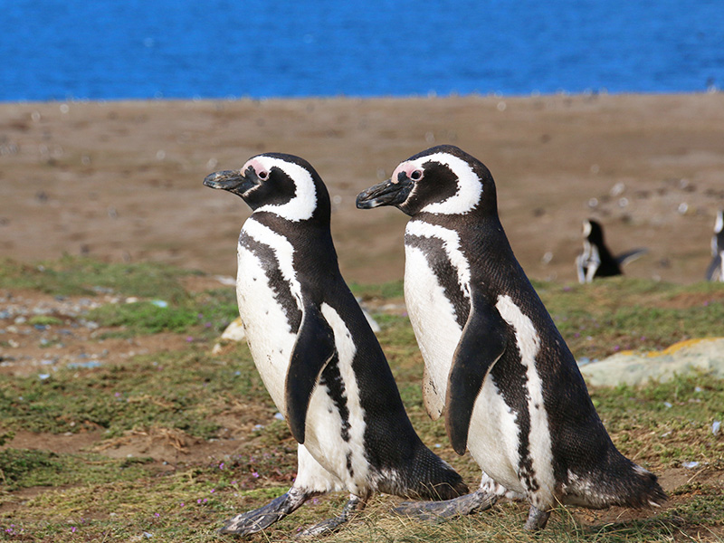 湯野川恭子はペンギン見に行くよ