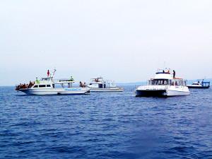 伊江島にホエールウォッチングボート集結